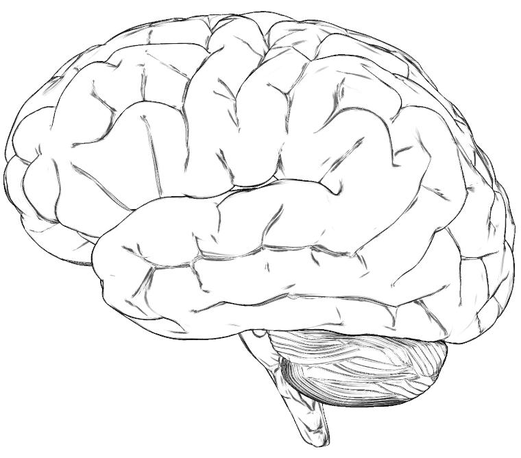 http://www.cs.princeton.edu/gfx/proj/sugcon/models/brain.png
